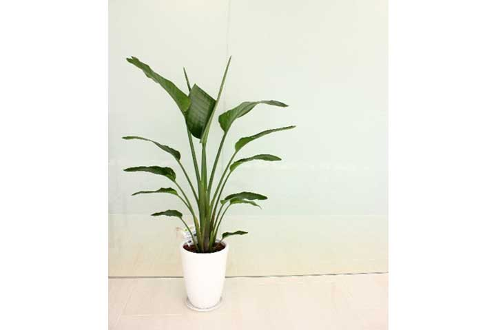 アジアン観葉植物